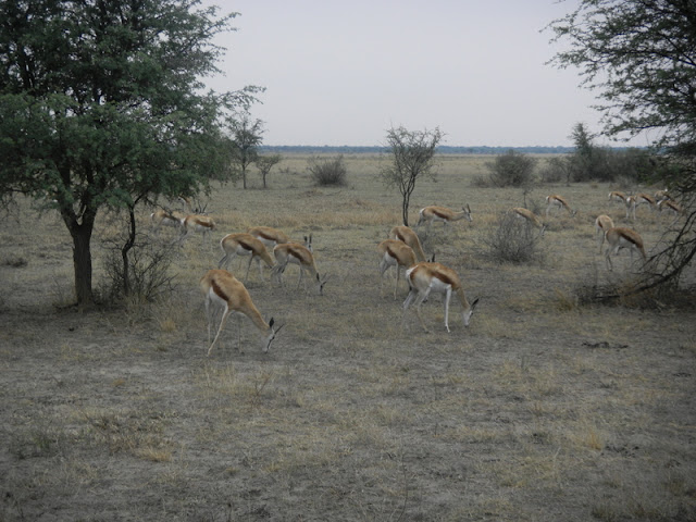 Seen at the Khama Rhino Sanctuary