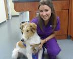 Coco-Sarcione-FB-dog-veterinarian-Danville-NH.jpg