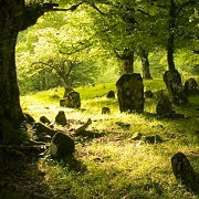 Собирать во сне цветы на кладбище