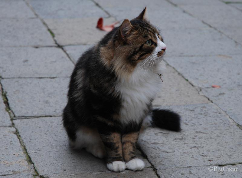 Gatti veneziani 06 11 2010 N 13