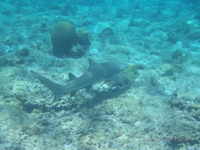 Buck Island Reef - IMGP1239.JPG
