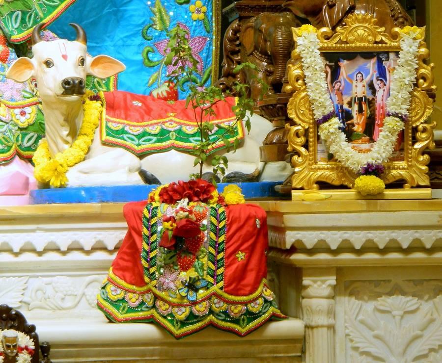 ISKCON Pune NVCC Deity Darshan 01 Jan 2017 (5)