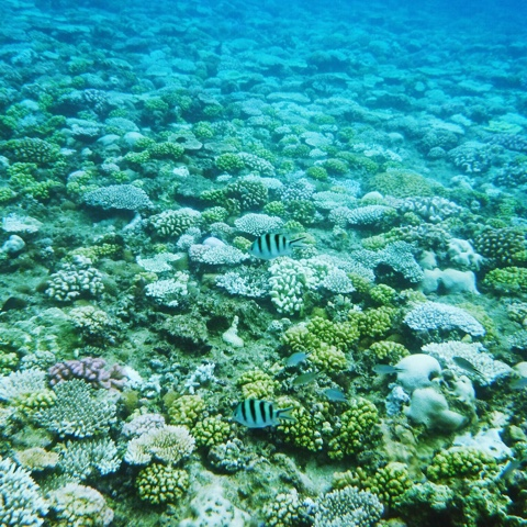 Coral snorkelling at Maeda Cape in Okinawa.