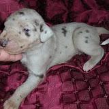 Brigette's silver girl @ 2 1/2 weeks