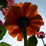 Gardening 2011 - 100_8642.JPG