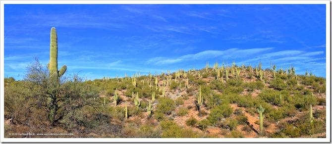 12/31/15: Boyce Thompson Arboretum, Superior, AZ (part 1)