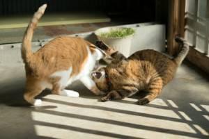 ケンカする2匹の猫