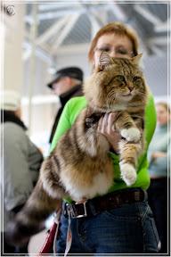 cats-show-24-03-2012-fife-spb-www.coonplanet.ru-073.jpg