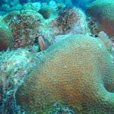 Bonaire 2011 - PICT0207.JPG