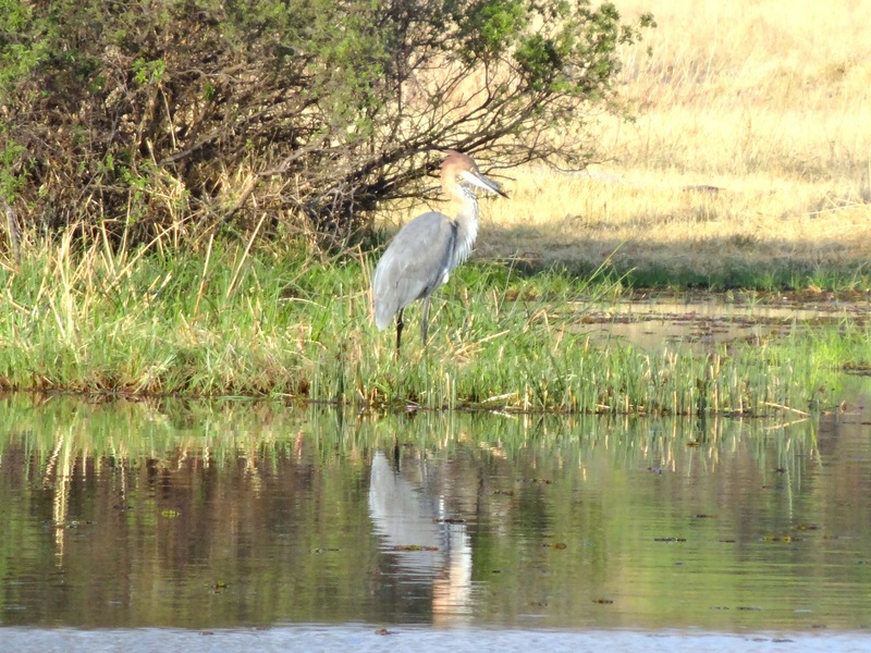 Botswana - DSC00526.JPG