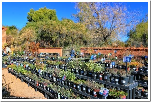 151230_Tucson_Tohono-Chul-Park_0082