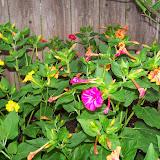 Gardening 2014 - 116_1964.JPG