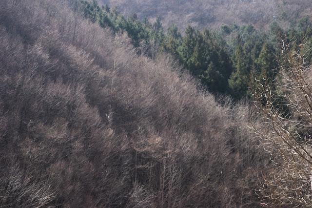 春待つ木立