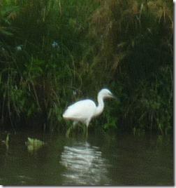 10 egret