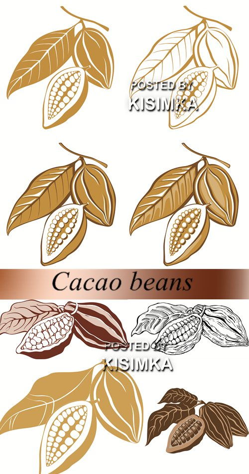 Stock: Cacao beans