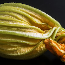 Pumpkin plant. by Simon Page - Nature Up Close Other plants
