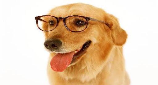 Smart dog names