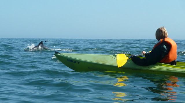 Dolphins seen while Kayaking off Pelican Point
