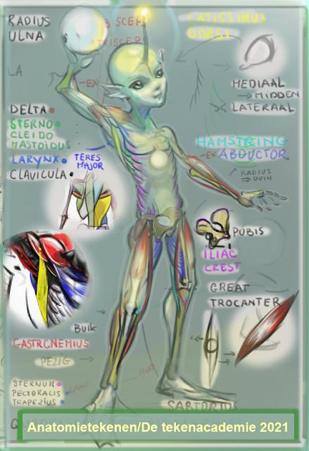 anatomietekenen,character,design,anatomie tekenen,concept art ,riggen,character design