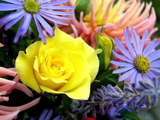 Mooie_bloemen_wallpapers.jpg