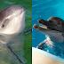 Conheça os animais mais comumente confundidos