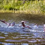 17.08.12 Emajõe Festival 2012 - AS20120817EJF_035V.jpg