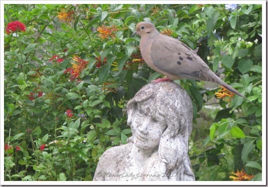 06-29-dove