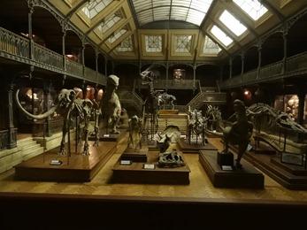 2018.08.22-123 le muséum d'histoire naturelle.JPG