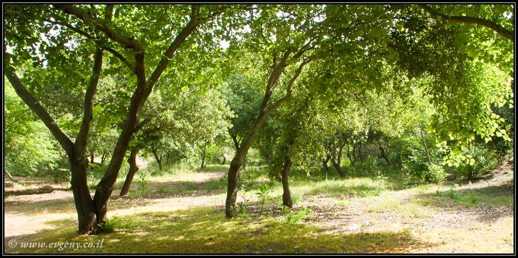 Парк Беит Шеарим