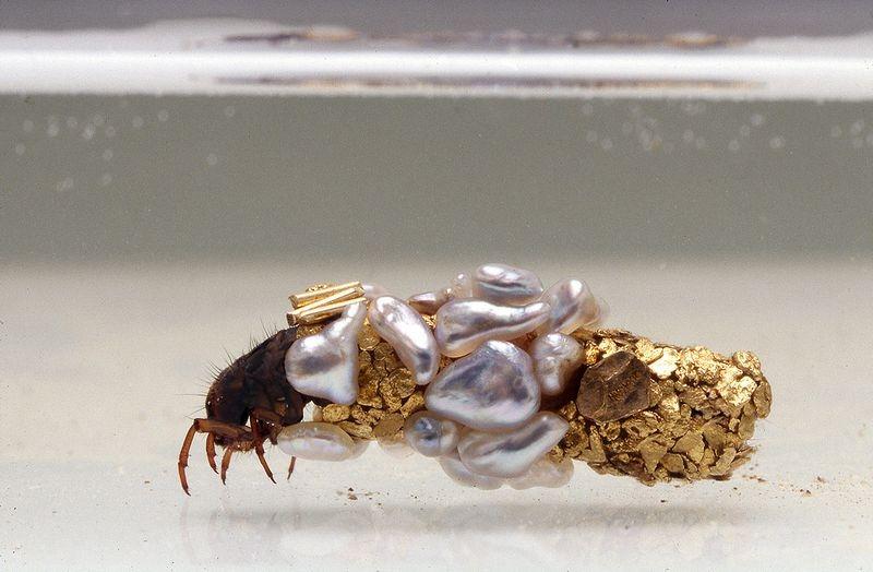 hubert-duprat-caddisfly-larvae-3