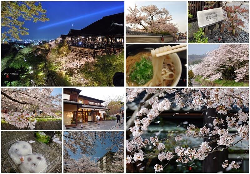 京都賞櫻(京都。桜)