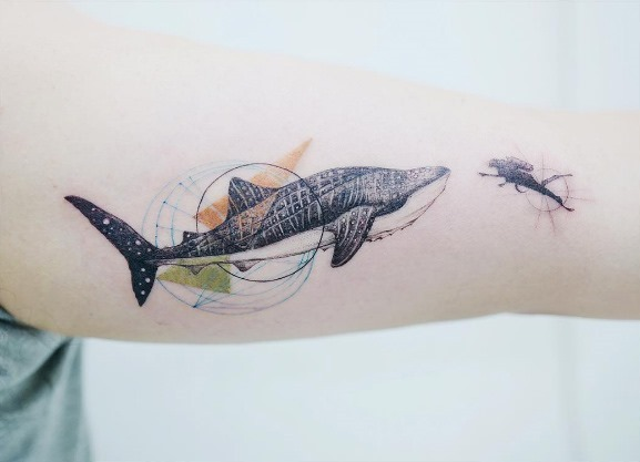 este_tubaro-baleia_encontrar