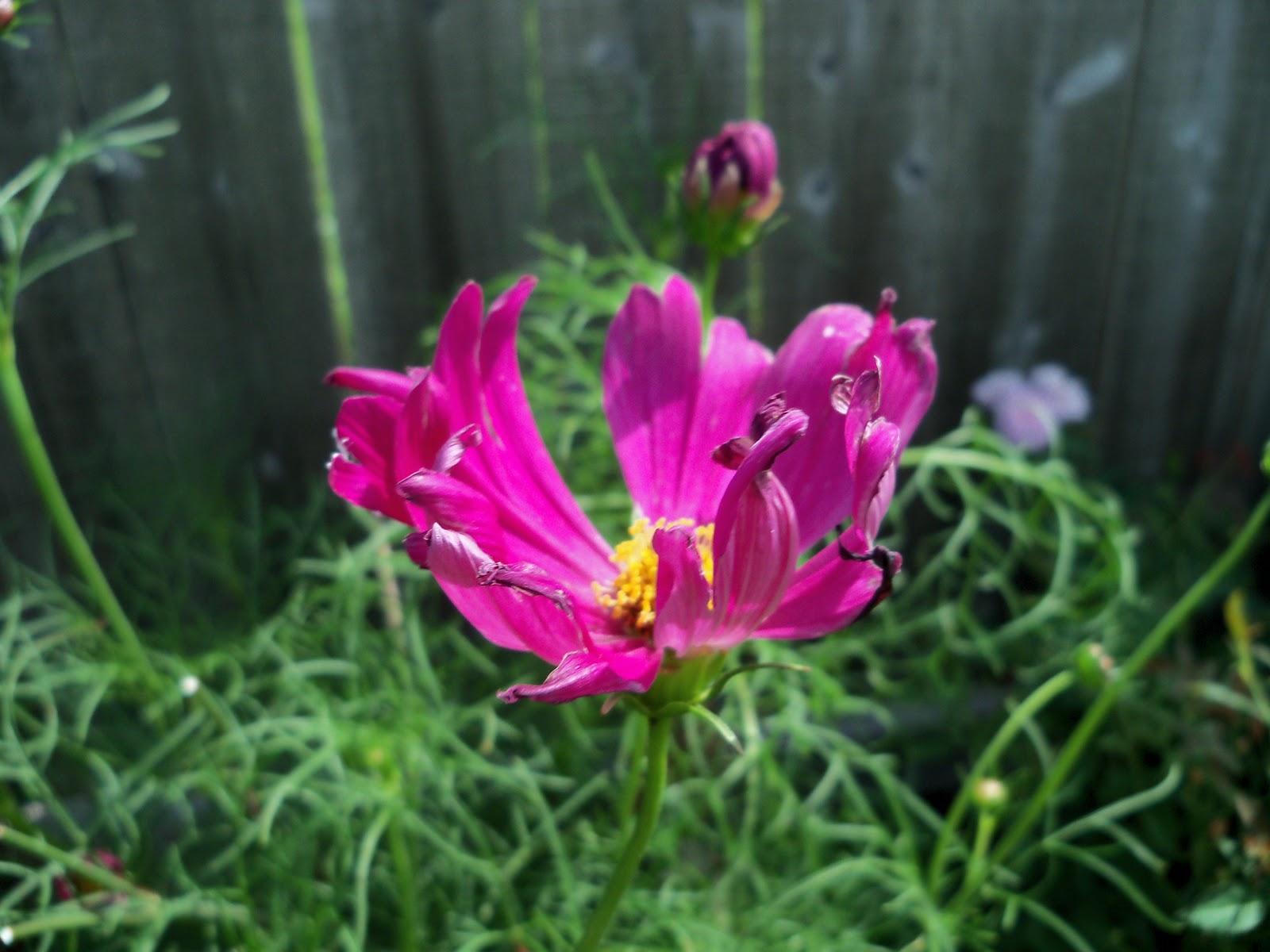 Gardening 2010, Part Three - 101_3701.JPG