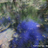 04-04-12 Hillsborough River State Park - IMGP9659.JPG