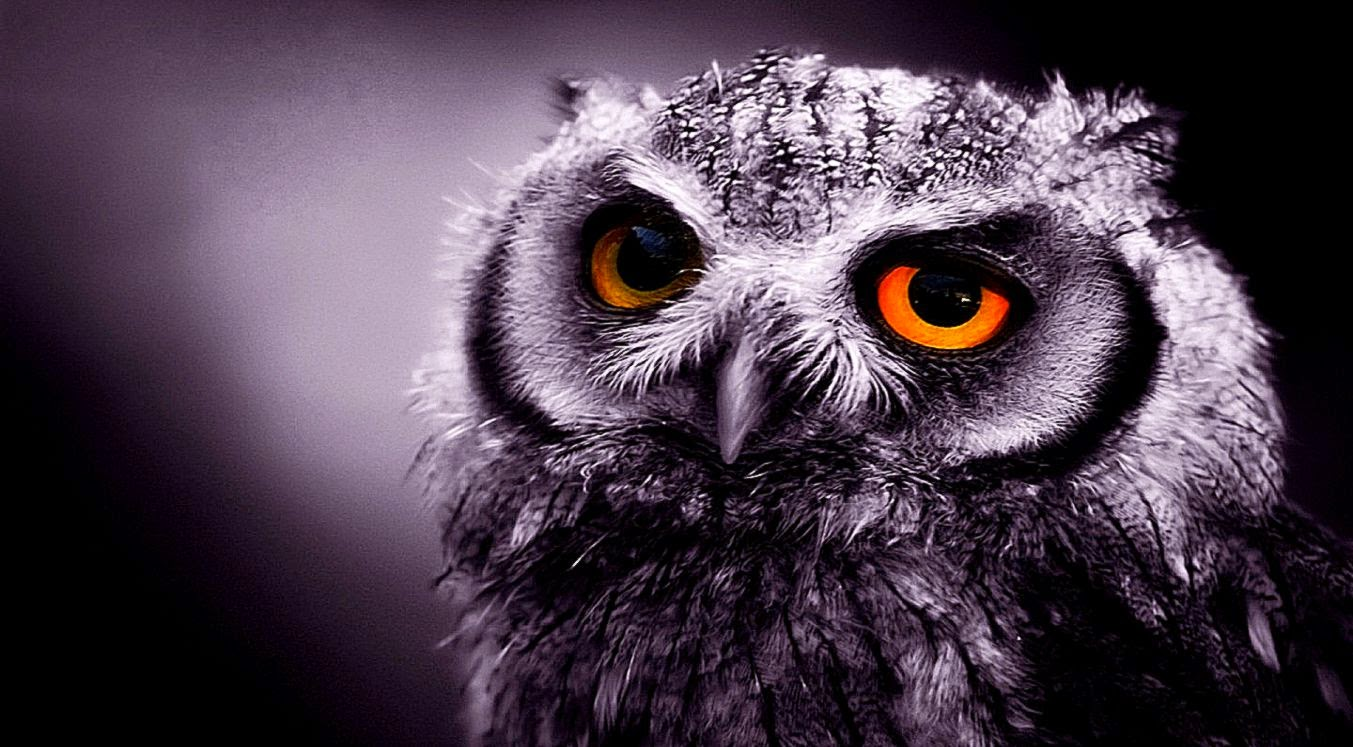 Beautiful   Wallpaper Home Screen Owl - a-selection-of-10-images-of-owl-in-hd-quality  Collection_909126.jpg