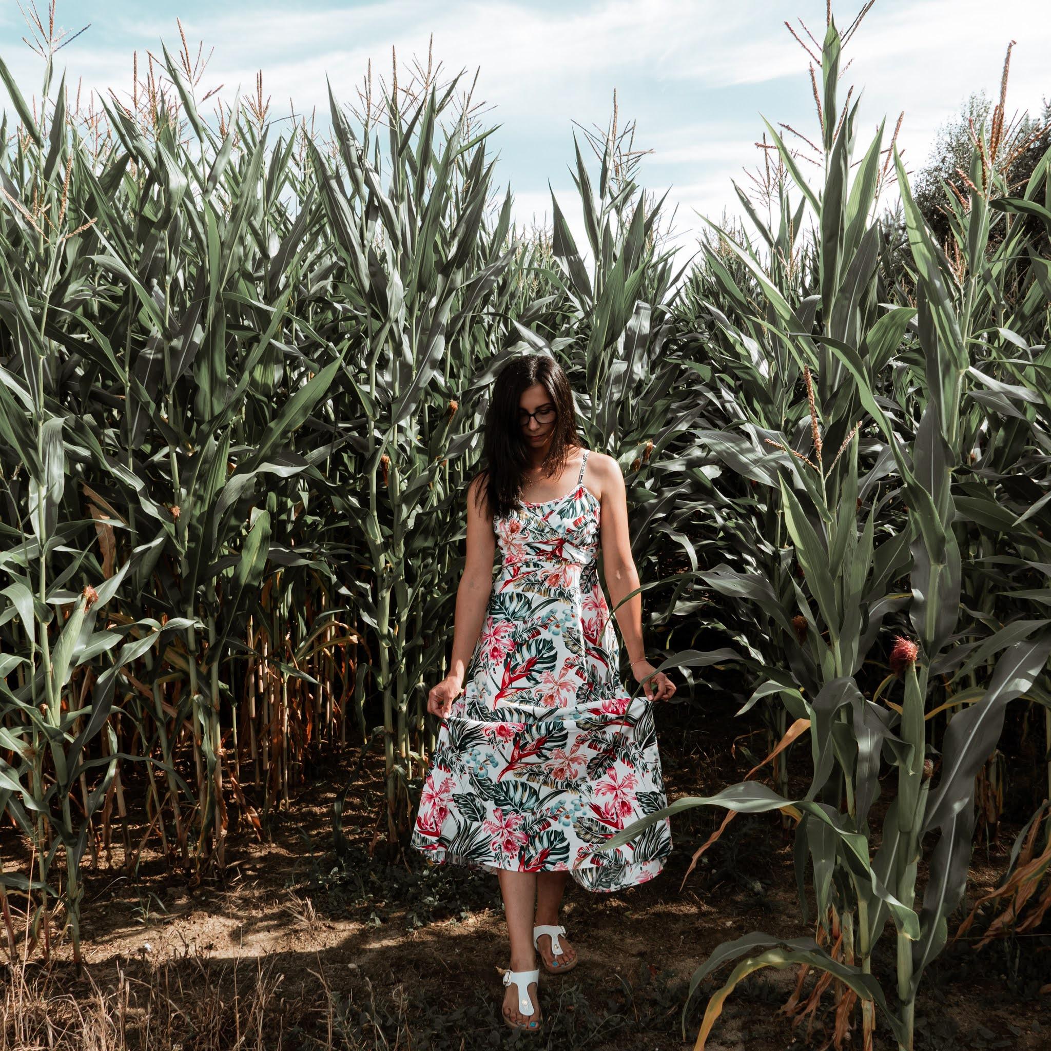 Sesja zdjęciowa na polu kukurydzy