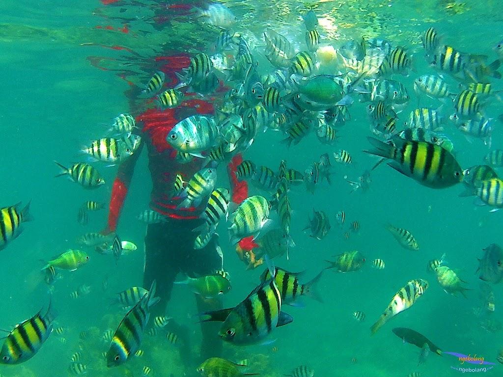 family trip pulau harapan, 1-2 agustus 2015 gopro 19