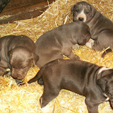 Star & True Blues February 21, 2008 Litter - HPIM1002.JPG