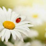 Flower 002_1280px.jpg