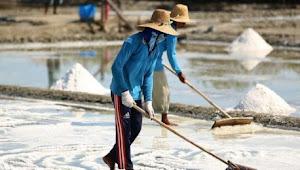 Impor Garam Masih Marak Pemerintah Harus Turun Tangan