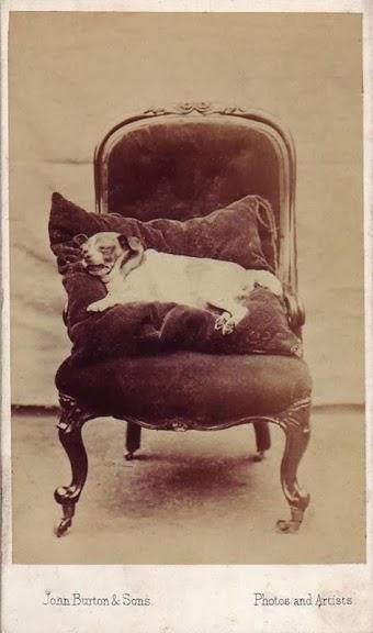 Cachorro morto fotografado na Era Vitoriana
