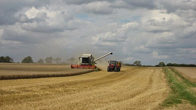Manor Farm Harvest - August 2008 - pic06.jpg