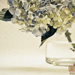 Flower 019_1280px.jpg