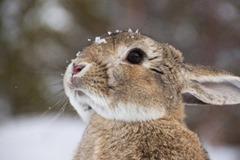 Cute-Rabbit-03 (4)