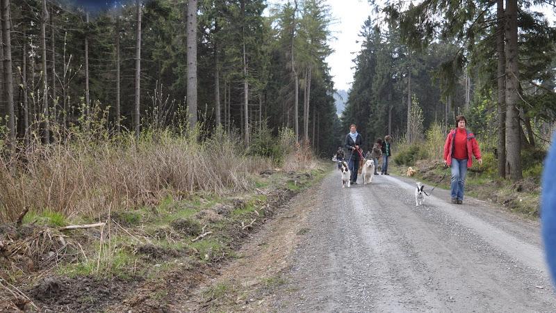 2014-04-13 - Waldführung am kleinen Waldstein (von Uwe Look) - DSC_0388.JPG