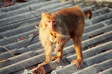 Monkeys have been become an unexpected part of the project!!