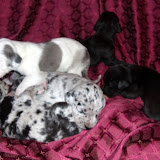 Gidget's litter @ 2 weeks of age