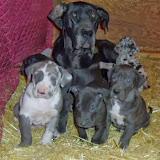 Gigi's gang @ 6 weeks