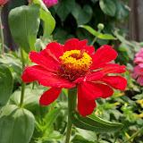 Gardening 2011 - 100_8619.JPG