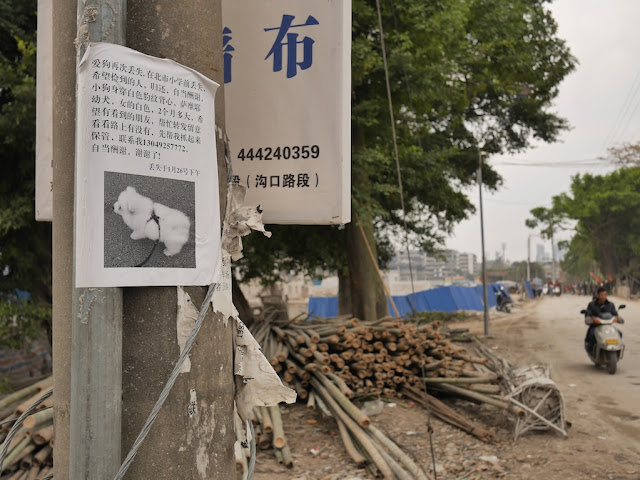 lost puppy sign in Jieyang, China